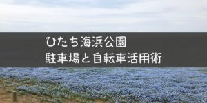 丘に咲く花